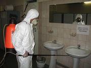 Уничтожение насекомых_ 909409048_ дезинсекция помещений в Ташкенте